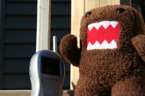 Domo watching Noby on the monitor today!!!