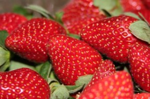 Our yummy Costco strawberries!